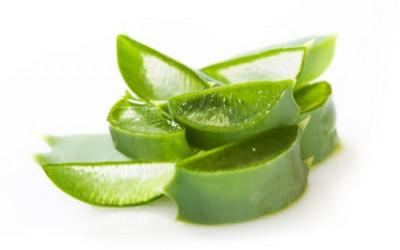 Utiliser l'aloe vera sous toutes ses formes