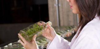 le métier d'herboriste