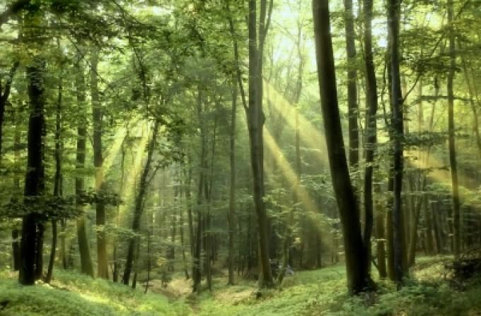 Le Bois Raméal Fragmenté