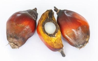 Le point sur l'huile de palme