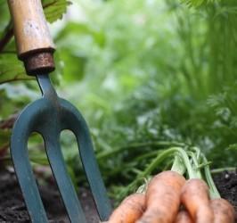 Prendre soin de son jardin bio