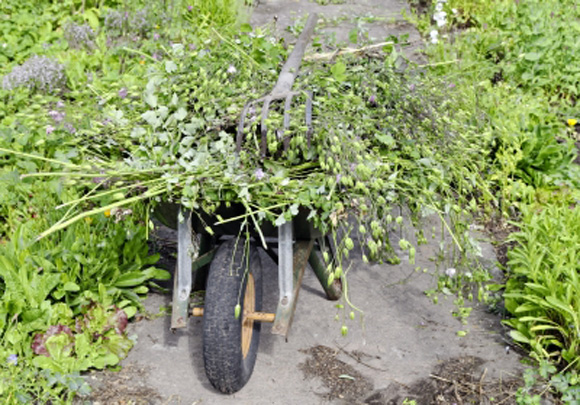 gérer mauvaises herbes au potager bio / reponsesbio