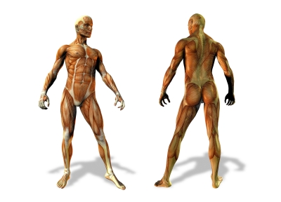 comment choisir un bon ostéopathe ?