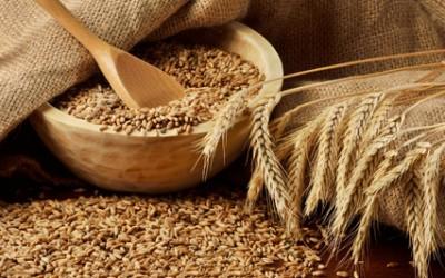 Vos céréales  pour cet hiver