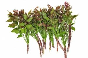 neem antioxydant ayurvédique