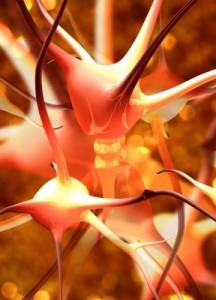 neurotransmetteurs cerveau