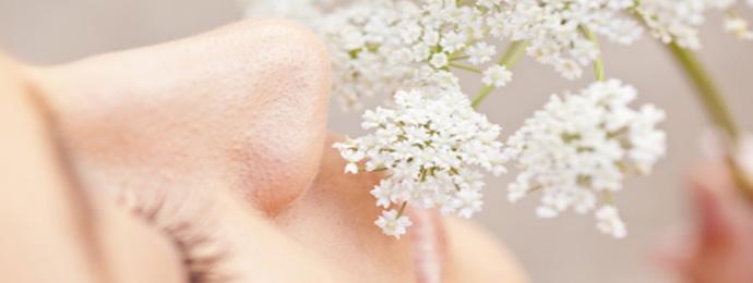 Les phytothérapiques de l'allergie