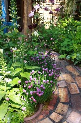 cultiver des aromates dans son jardin ou sur son balcon