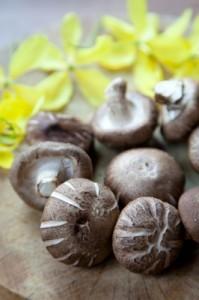 shiitake, champignon de l'immortalité
