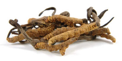 le cordyceps un anti fatigue naturel
