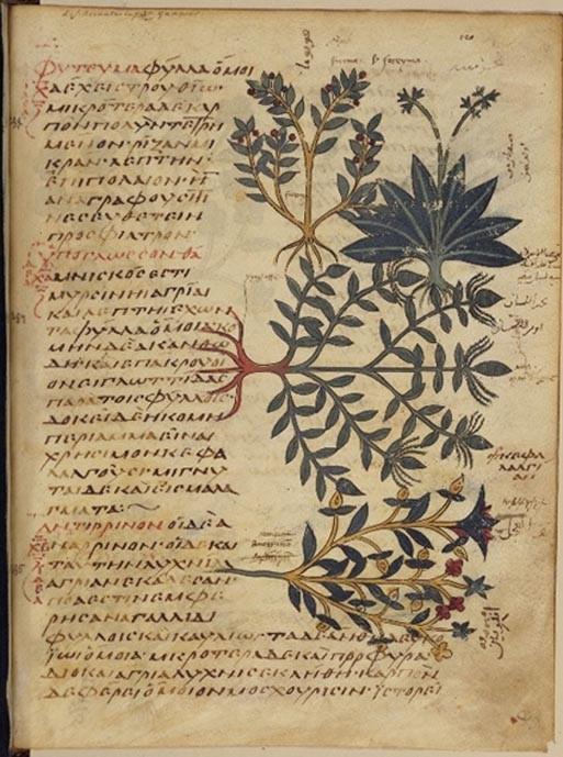 medecine traditionnelle des plantes
