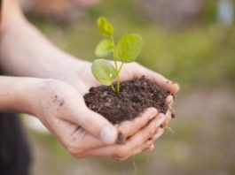 Plantes et semences bio