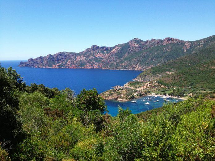 les plantes de Corse