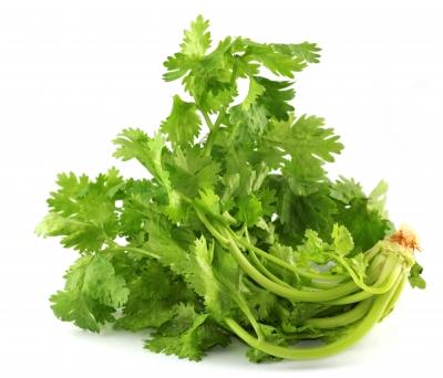 la coriandre: diététique chinoise, nutrition consciente: herbes et épices
