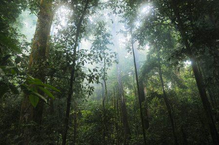compléments à base de plantes amazoniennes et tropicales