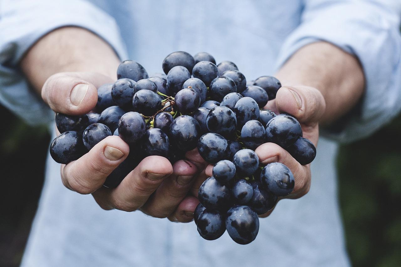raisins riches en minéraux et vitamines