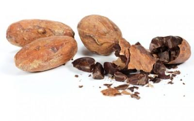 Les bons polyphénols du cacao