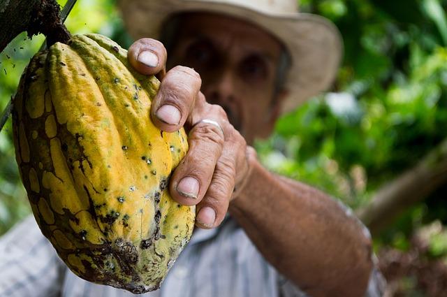 les bienfaits du cacao cru bio