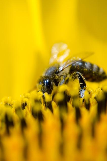 bienfaits du pollen frais