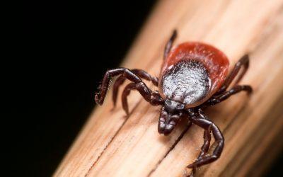 La maladie de Lyme : dépistage, prévention et soins naturels