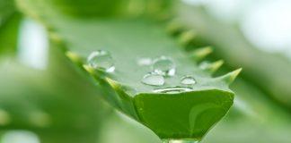 Bienfaits du jus d'aloe vera : une cure de santé et de beauté