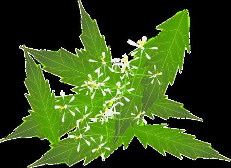 huile de neem pour la beauté et la santé