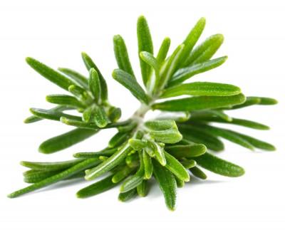 huile essentielle de romarin : hypertensive, stimulante, hépatique, anti-virale, anti-inflammatoire...