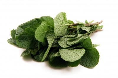 huile essentielle de menthe : anti-douleur, anti-migraine, stimulante, digestive...