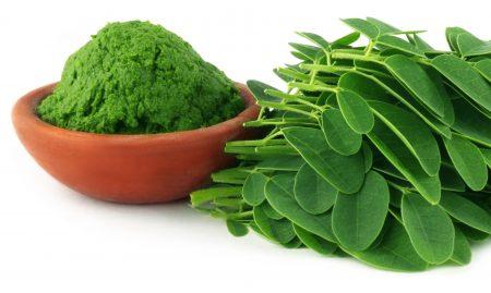 Vertus du Moringa : graines, écorce, feuilles, racines