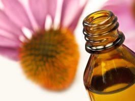 Phytothérapie : quelles plantes pour stimuler le système immunitaire ?