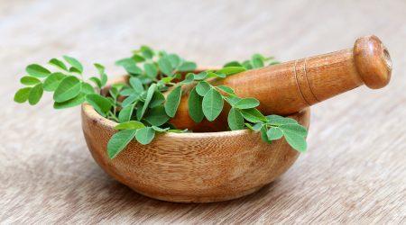 Quelles sont les vertus du Moringa : graines, écorce, feuilles, racines
