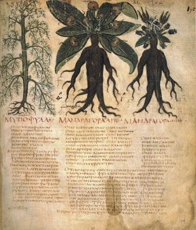 Manuscrits de formules d'élixirs de plantes