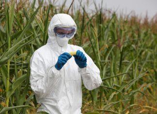 Bayer et Monsanto fusionnent, laissant présager le pire pour l'avenir