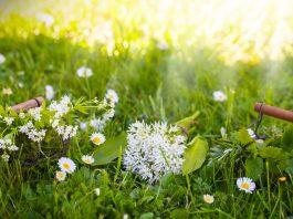 Cueillette des plantes sauvages médicinales et aromatiques