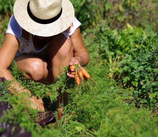 Associer les plantes au potager
