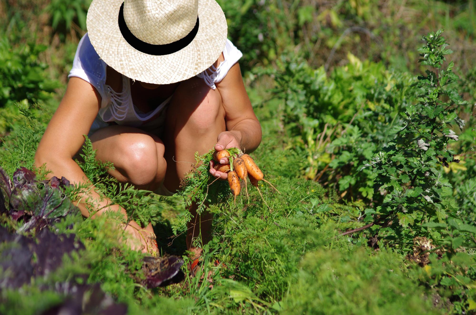 Associer les plantes au potager r ponses bio for Au jardin de la nymphe bleue