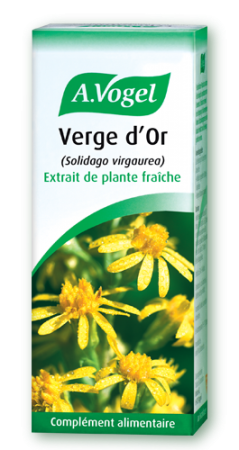 Verge d'or plante infections urinaires