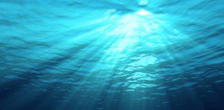 Plasma marin de René Quinton