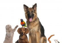 naturotherapies veterinaires