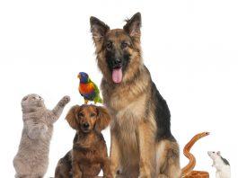 naturotherapies veterinaires