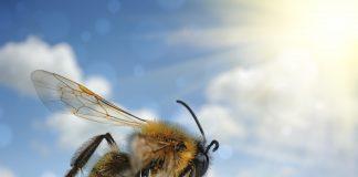 odyssee des abeilles et tresors de la ruche