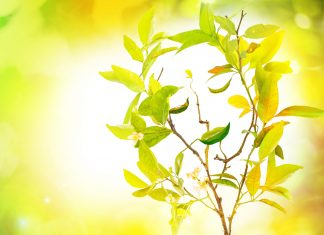 phytotherapie de la joie de vivre