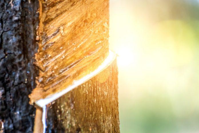 Lait d'hevea : matelas en latex naturel