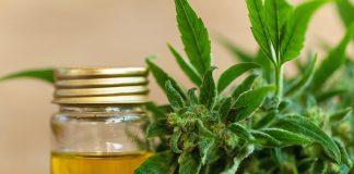 Cannabis thérapeutique cannabinoïdes : CBD, CBN, THC