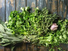 herbes aromatiques coriandre origan