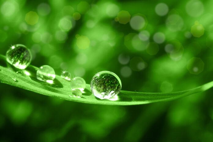 aromatherapie-homeopathique-hydrolat-cannabis-reponses-bio